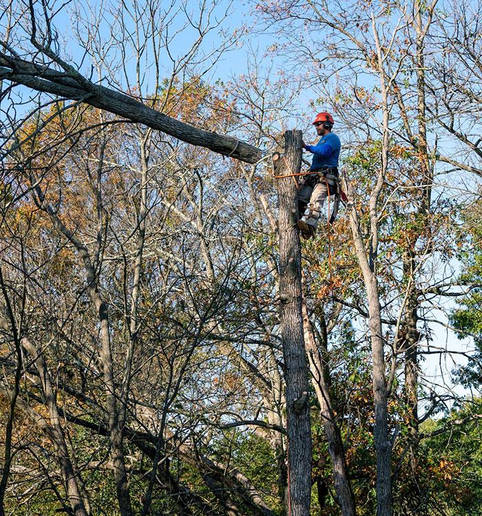 Montgomery County PA Tree Service